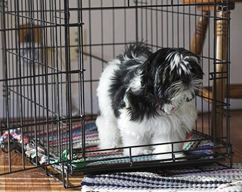 Dog Tricks, Obedience - Photo of Shih Tzu in a wire crate by Dave Clark