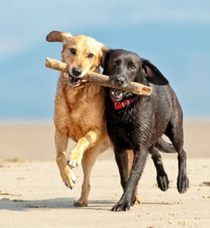 Dog Training & Teaching