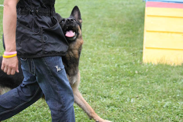 Dog Tricks, Obedience, Dog Training