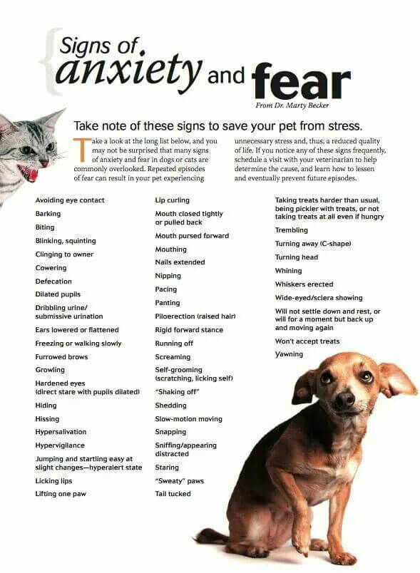 Dogs Medicine, Veterinary, First Aid - INFOGRAm, INFOGRAPHICS - PRESS TO SEE IN FULL SIZE!