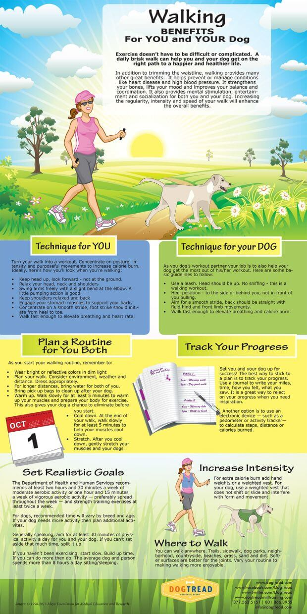 DOG WALKING TECHNIQUES INFOGRAM - PRESS TO SEE IN FULL SIZE!