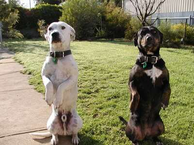 Dog Training School Obedience Video Tips