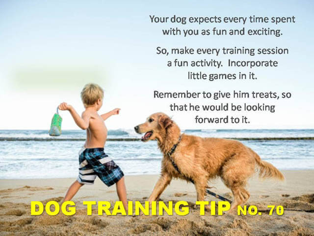 Dog Training Tips & Techniques