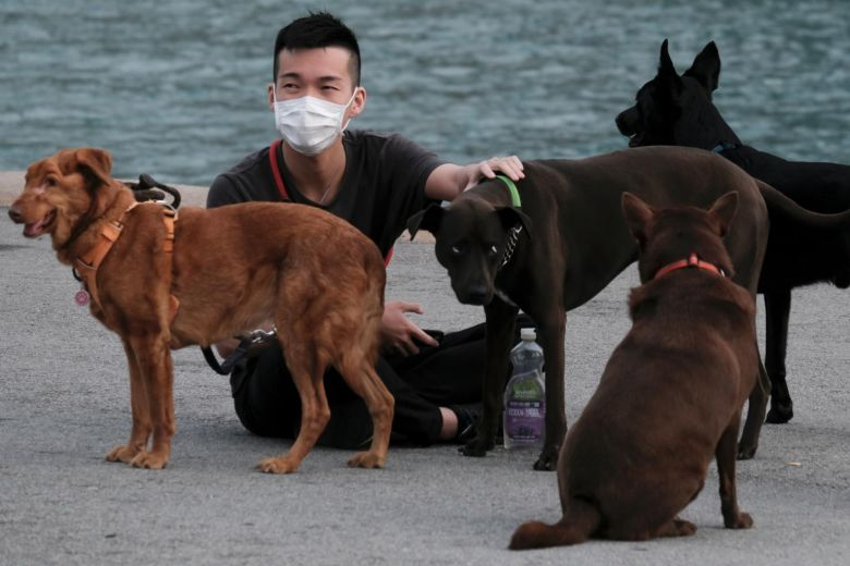 HONG-KONG DOGS and CORONAVIRUS COVID-19 - THIS PHOTO (c) by REUTERS !!!