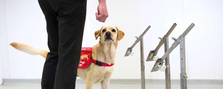 Can Dogs Detect or Sniff Coronavirus?