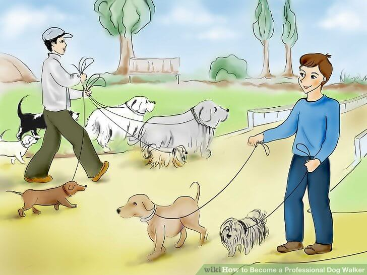 PROFESSIONAL DOG WALKING & WALKERS