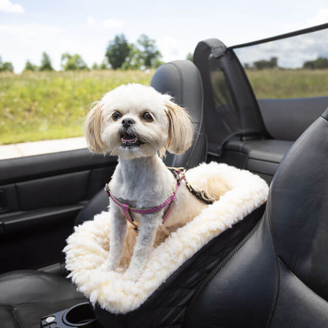 Best Dog Car Barriers