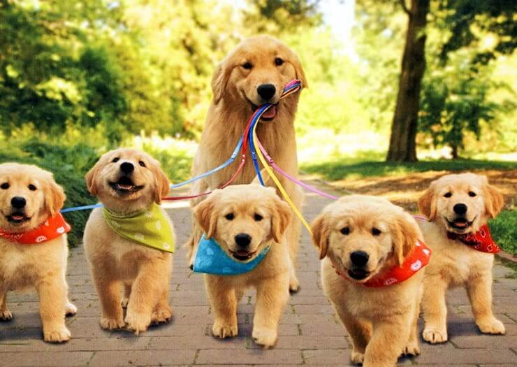 WALKING DOGS & PUPPIES