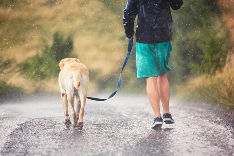 6 TIPS FOR WALKING YOUR DOG AT RAIN