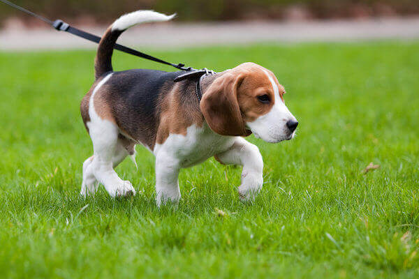 TRAIN YOUR DOG NOT TO PULL THE LEASH?