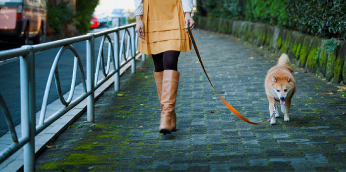 HOW TO TRAIN YOUR DOG TO WALK ON THE LEASH?