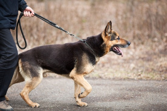TRAIN YOUR DOG NOT TO PULL THE LEASH
