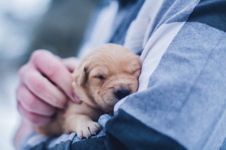 44 WAYS TO SOCIALIZE YOUR PUPPY