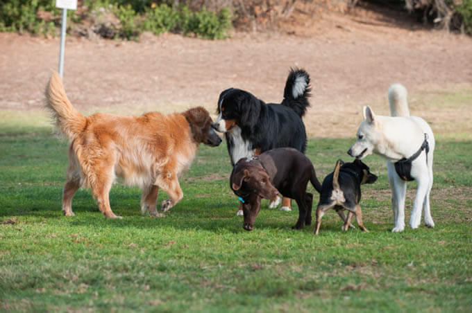 PUPPY SOCIALIZATION: HOW TO RAISE A FRIENDLY DOG