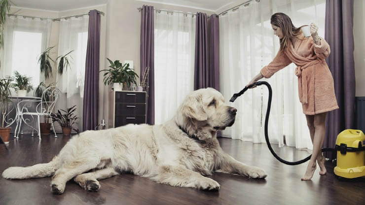 HOW TO CLEAN YOUR HOME AFTER DOG's SHEDDING SEASON