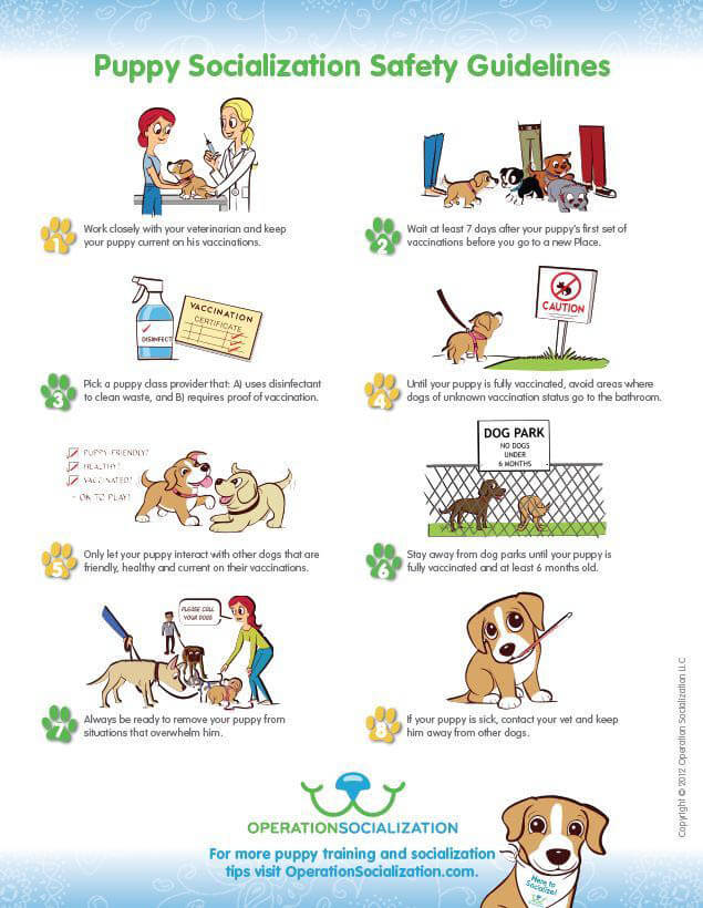 HOW TO SOCIALIZE YOUR DOG FOR A PARK?