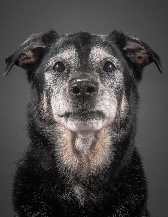 BLINDNESS IN OLDER DOGS