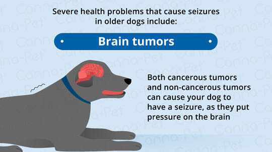 SEIZURES IN OLDER DOGS