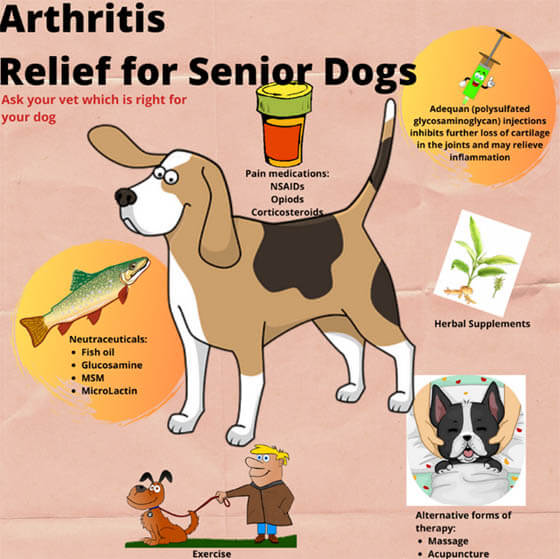 WAYS TO TREAT ARTHRITIS IN DOGS
