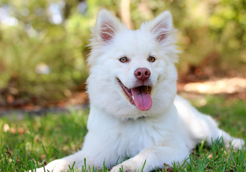 DOG GROOMING TIPS & GUIDE