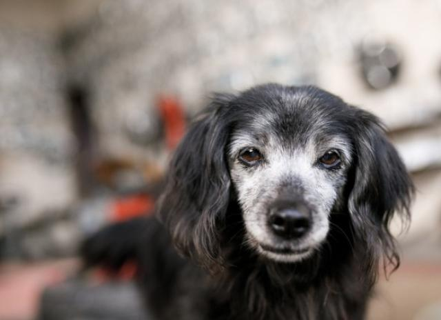 SENIOR DOG MYTHS