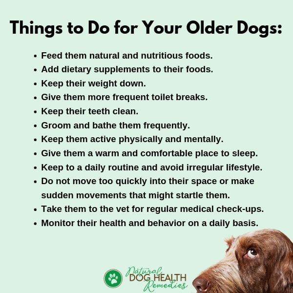 OLD DOG PAIN RELIEF TIPS