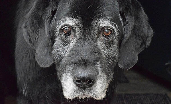 WEIGHT LOSS IN OLDER DOGS