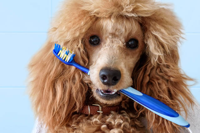 DENTAL CARE TIPS FOR OLDER DOGS