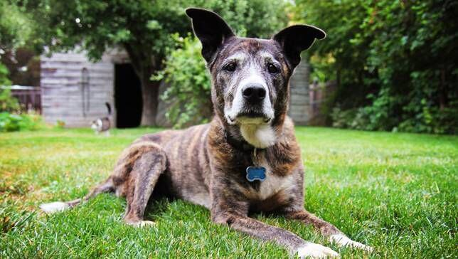 DIABETES IN SENIOR DOGS