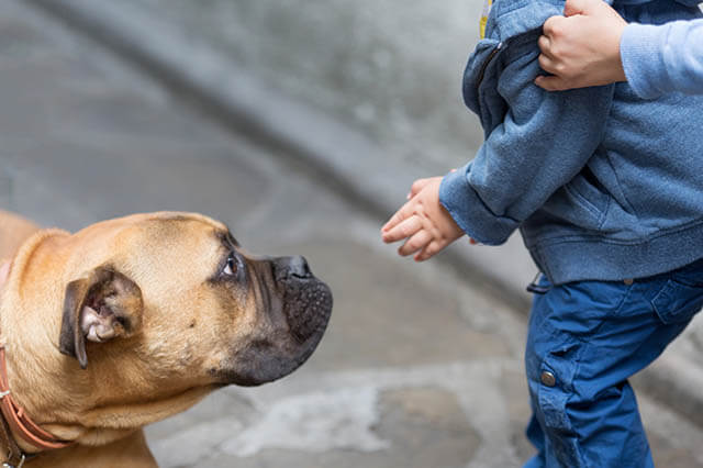 HOW TO HELP CHILD TO OVERCOME FEAR OF DOGS