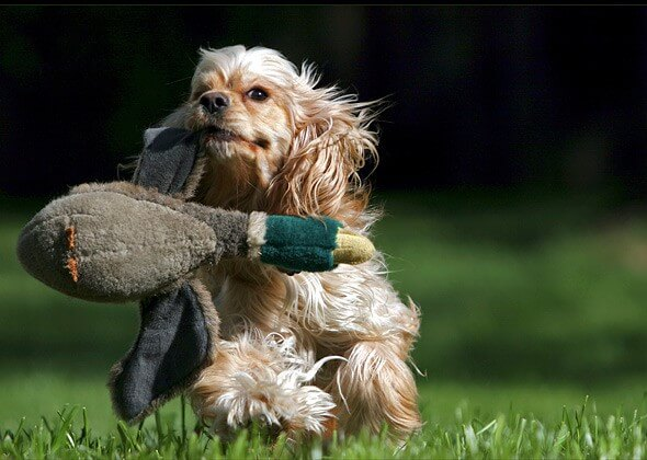 DOG GAME TYPES - THIS IMAGE (C) by ThinkStock