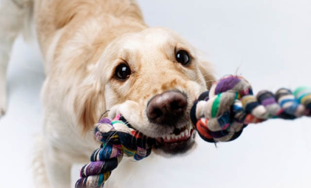 HOW TO PLAY WITH YOUR DOG - THIS PHOTO (c) BY DEPOSITPHOTOS