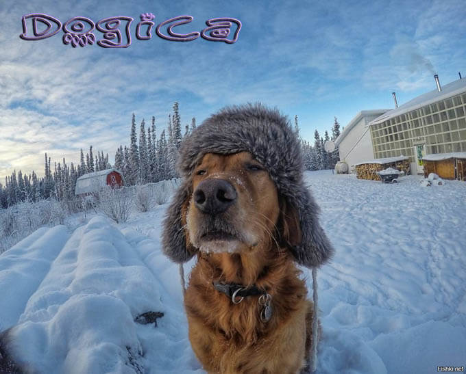 TIPS FOR WALKING YOUR DOG AT WINTER