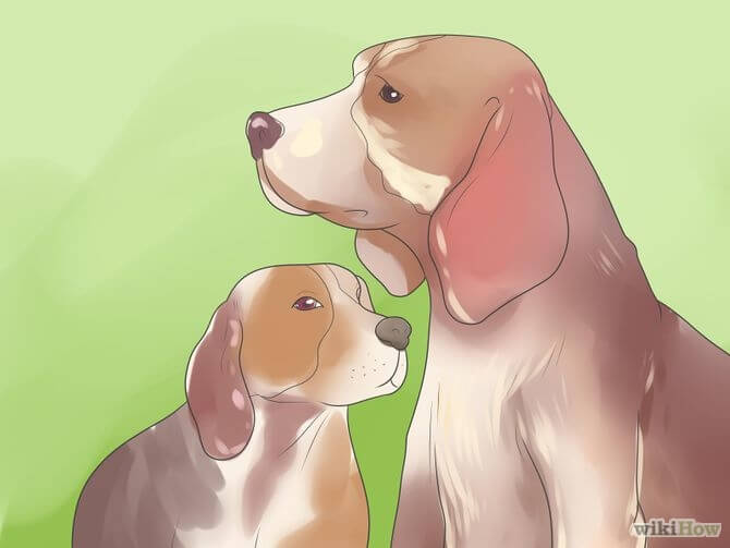 DOG AND PUPPY AGE DETERMINE, HOW OLD IS YOUR DOG, DOG AGE CHART, HOW TO KNOW DOG's AGE?