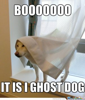 DOG and GHOST, MYTHS, STORIES