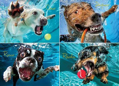UNDERWATER DOGS PHOTOS COLLECTION