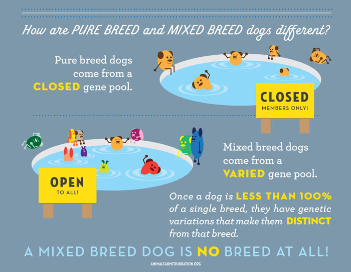 Dog Breeds Tree & Origins