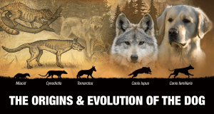 WOLF & DOG EVOLUTION
