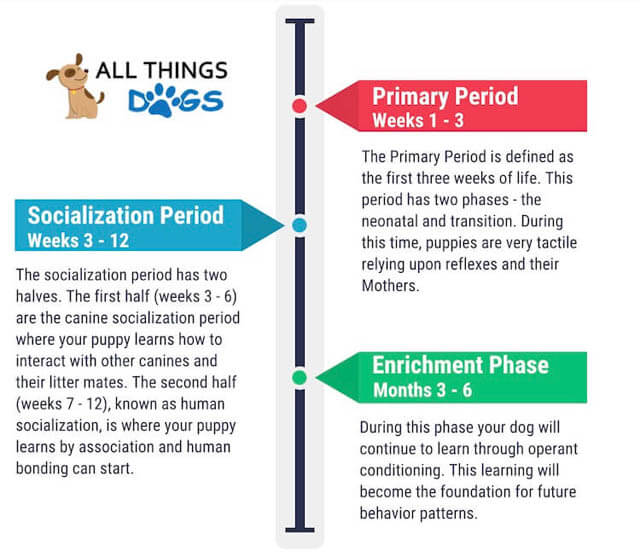 WHEN TO SOCIALIZE YOUR PUPPY?
