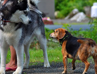 HOW TO SOCIALIZE YOUR DOG WITH OTHER DOGS