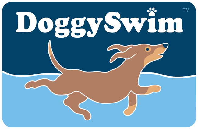 Buy best dog pools & accessory online