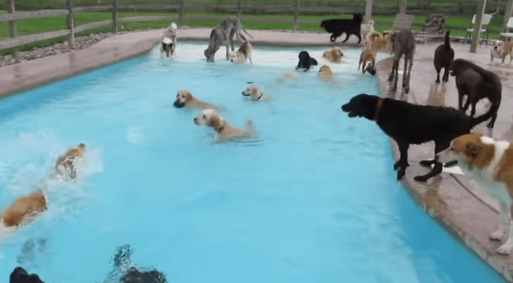 Dog Pools, Underwater Dogs and Puppies