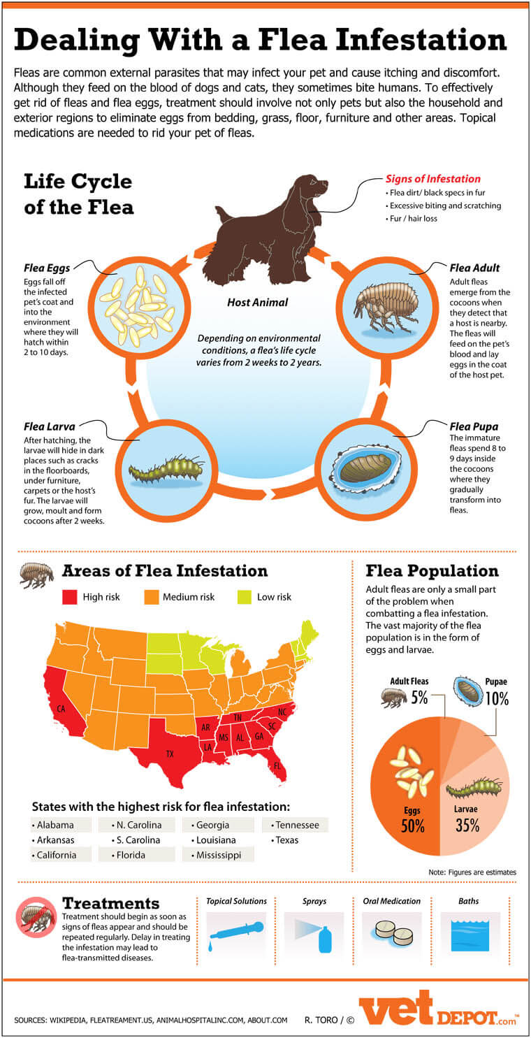 Dog Fleas, Mites and Ticks