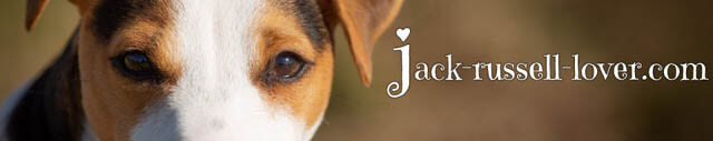 WWW.JACK-RUSSELL-LOVER.COM