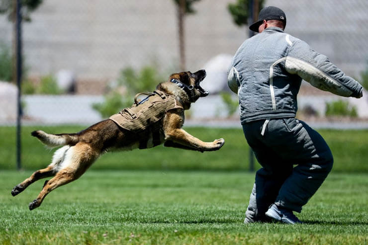 POLICE DOGS TRAINING