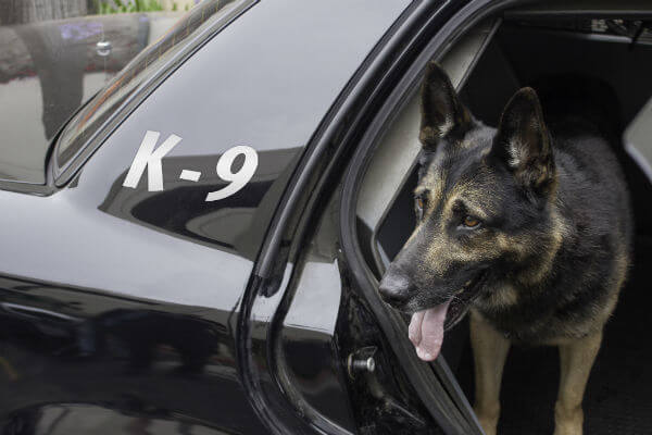 POLICE DOG RETIREMENT & ADOPTION