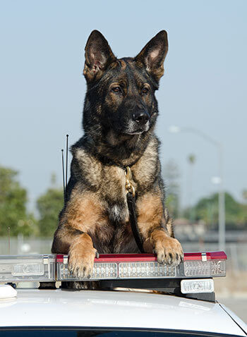 POLICE DOGS TRUTH & FACTS