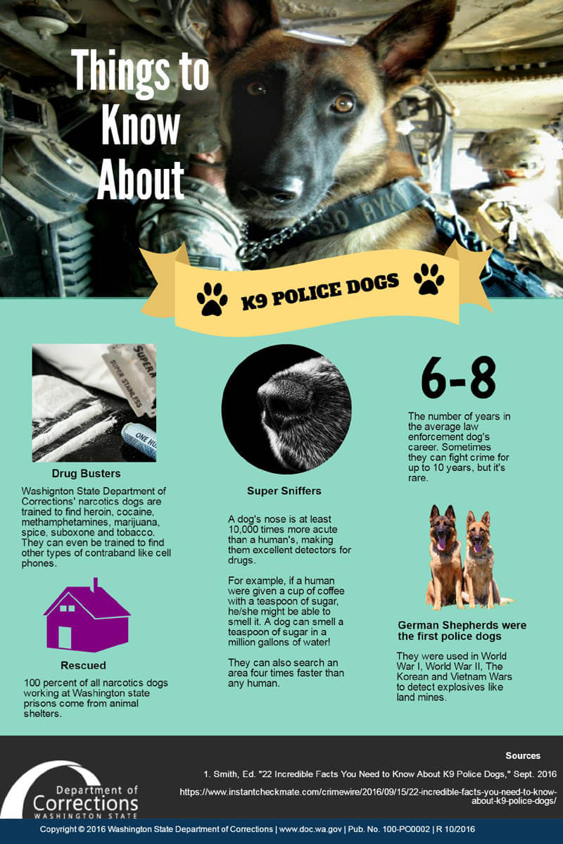 POLICE DOG TYPES & ROLES INFOGRAPHICS, INFOGRAM