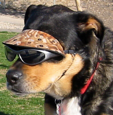 Doggles - Glasses For Dogs