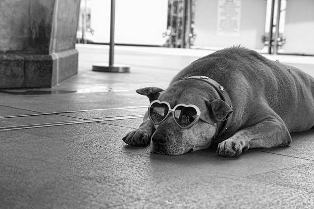 Eye, Sun, Protective Glasses For Dogs - Doggles